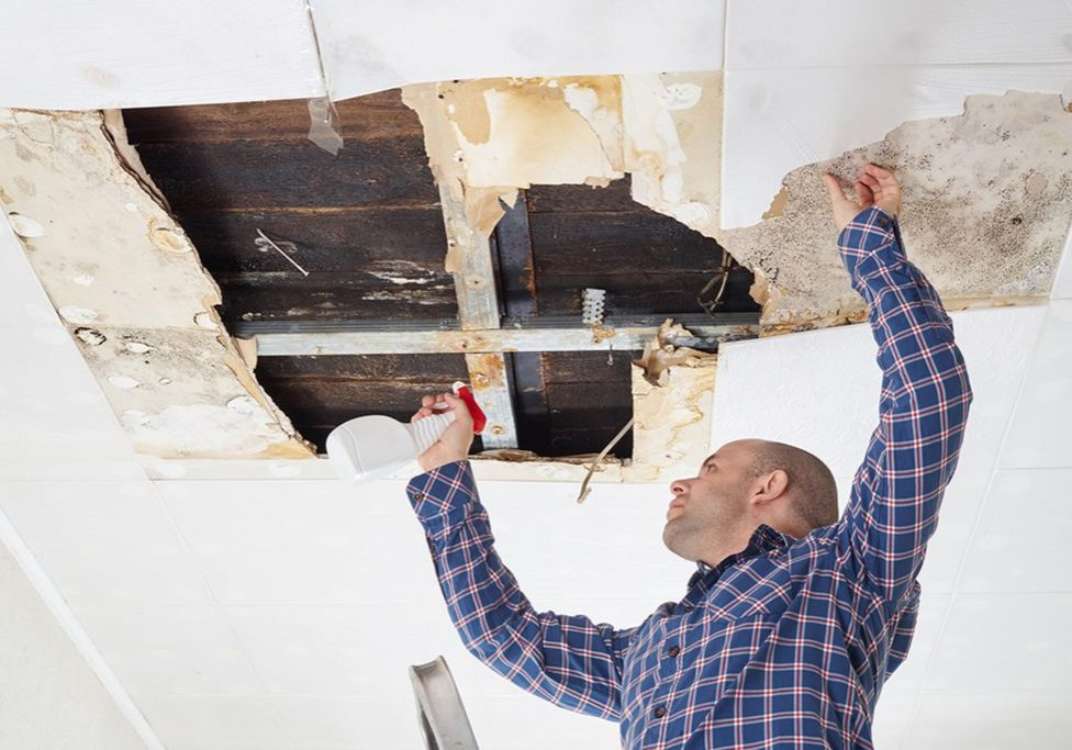 technician doing mold removal
